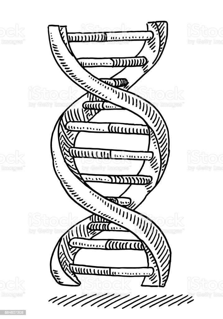 DNA Strand Genetics Symbol Drawing Royalty Free Dna Stock Vector Art
