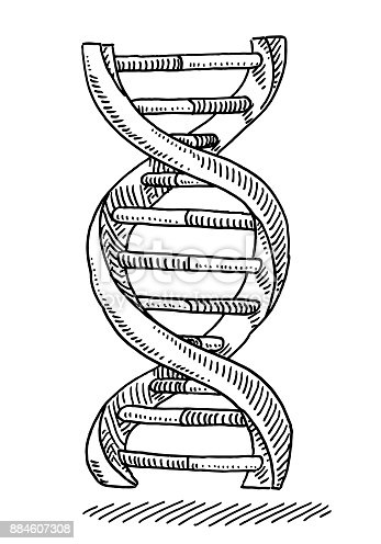 Dna Strand Genetics Symbol Drawing Stock Vector Art & More