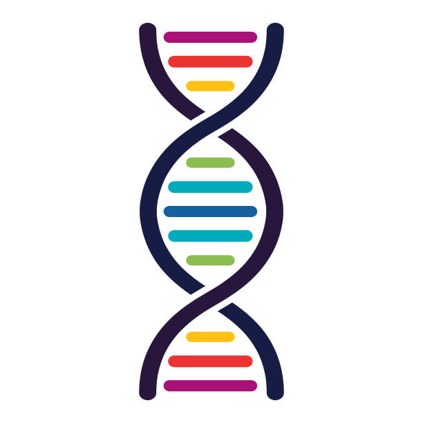 DNA Strand - Vector DNA vector illustration dna test stock illustrations