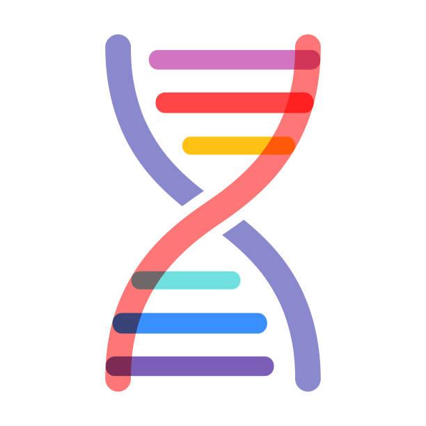 dna strand - vector - genetics stock illustrations, clip art, cartoons, & icons