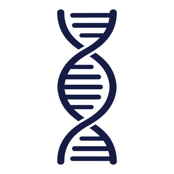 DNA Strand - Vector DNA vector illustration helix model stock illustrations