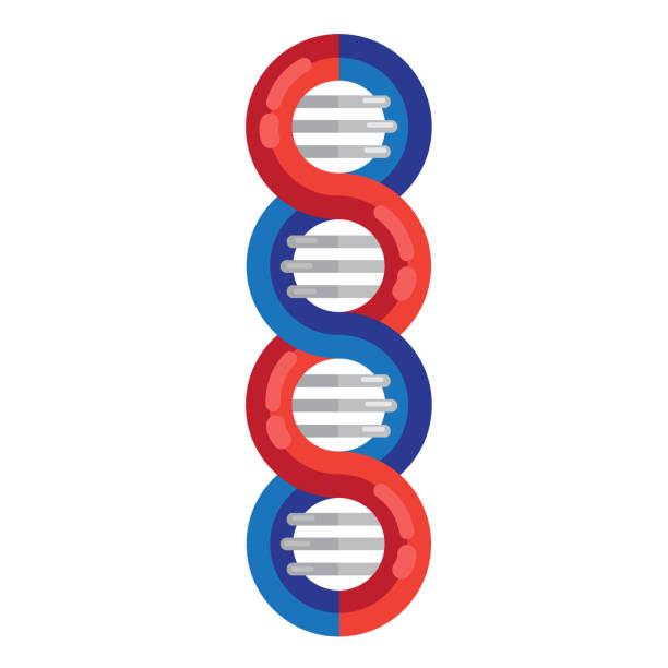 dna鏈分子載體圖示。螺旋遺傳dna醫學圖示。螺旋結構符號。dna 鏈 放大雙螺旋結構 藍色和紅色 - medical technology 幅插畫檔、美工圖案、卡通及圖標