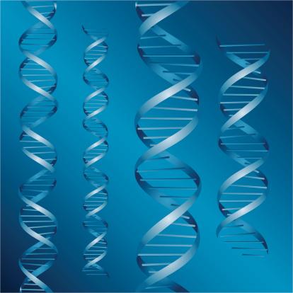 DNA strands vector