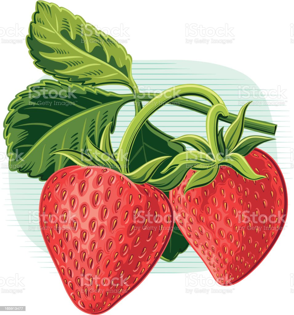 Strawberries on vines with seeds vector art illustration
