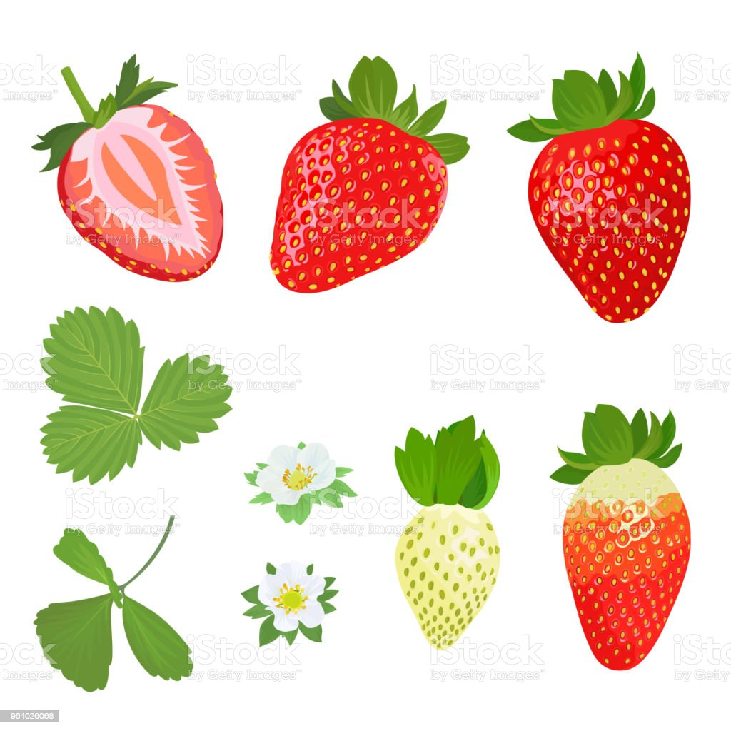 Strawberries plant with leaves, stems and flowers on white background. - Royalty-free Agriculture stock vector