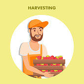 Strawberry Harvesting Poster Flat Vector Template. Customer Choosing, Buying Ripe Berry. Farmer, Handyman Cartoon Character Selling Organic Fruits. Natural Ripe Crop in Wooden Container