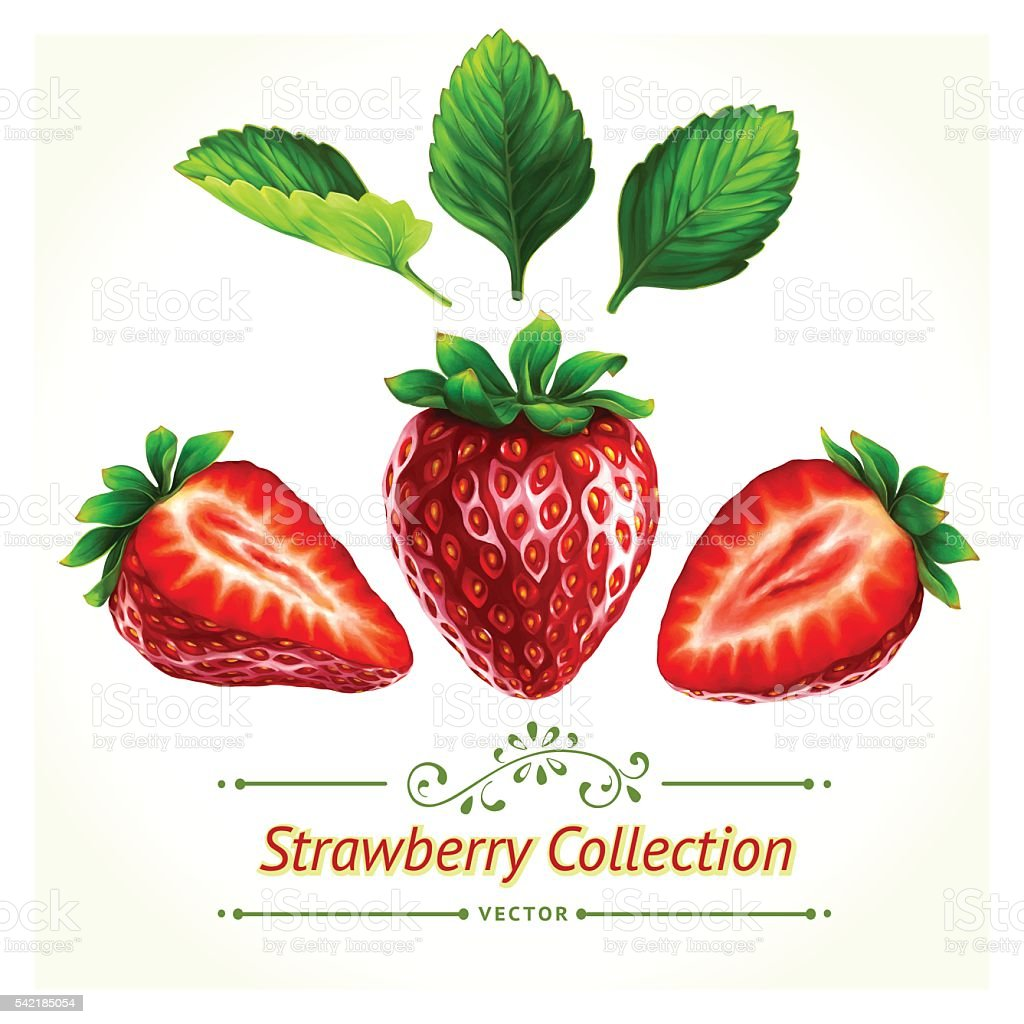 Strawberry, leaves and berries vector art illustration