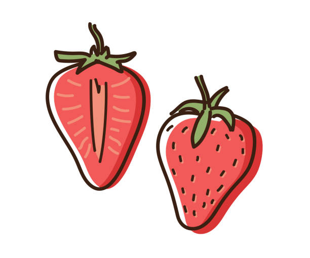 illustrazioni stock, clip art, cartoni animati e icone di tendenza di strawberry outline illustration with watercolor effect. vector doodle sketch hand drawn fruit illustration - fragole