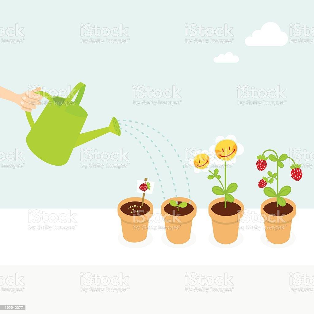 Ilustración de Fresa Planta De Etapas Naturaleza Serie y más banco ...
