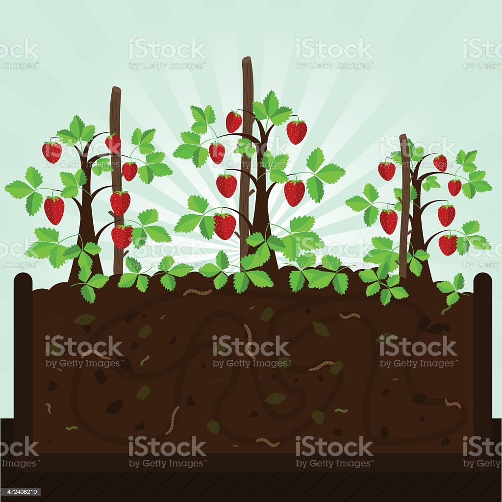 Strawberry tree and compost vector art illustration