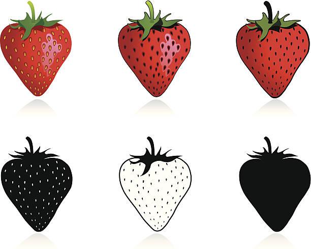 - Erdbeere – Vektorgrafik