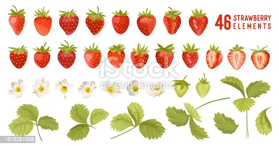 istock Strawberry vector illustration set. Watercolor cute berry, flowers, leaves isolated. Summer garden design elements for invitation, greetings, textile, backdrop, wallpaper 1313261008