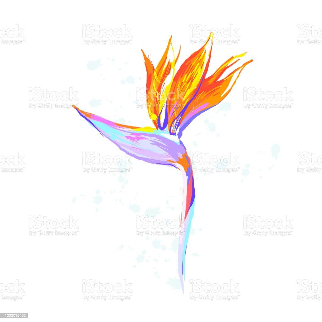 Strelitzia Reginae Flower Birdofparadise Crane Flower On White Stock