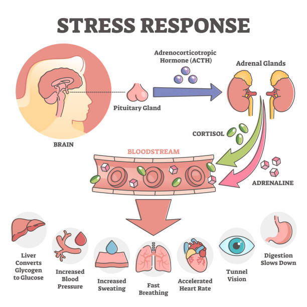 Stress response anatomical scheme with body inner reaction outline concept vector art illustration