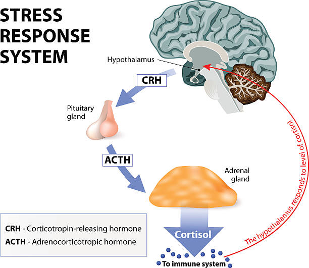 stress response system - stress stock illustrations, clip art, cartoons, & icons
