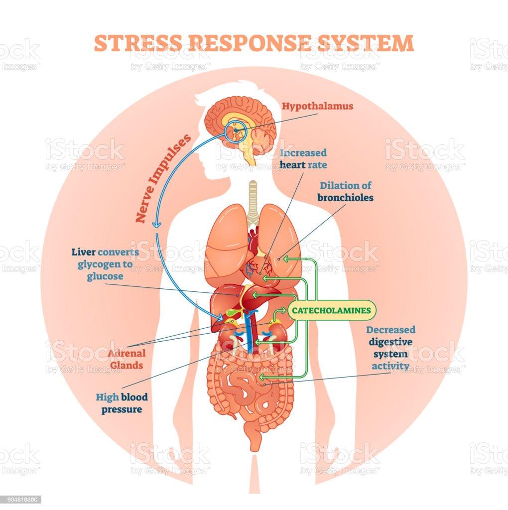 Stress response system vector illustration diagram, nerve impulses scheme. royalty-free stress response system vector illustration diagram nerve impulses scheme stock illustration - download image now