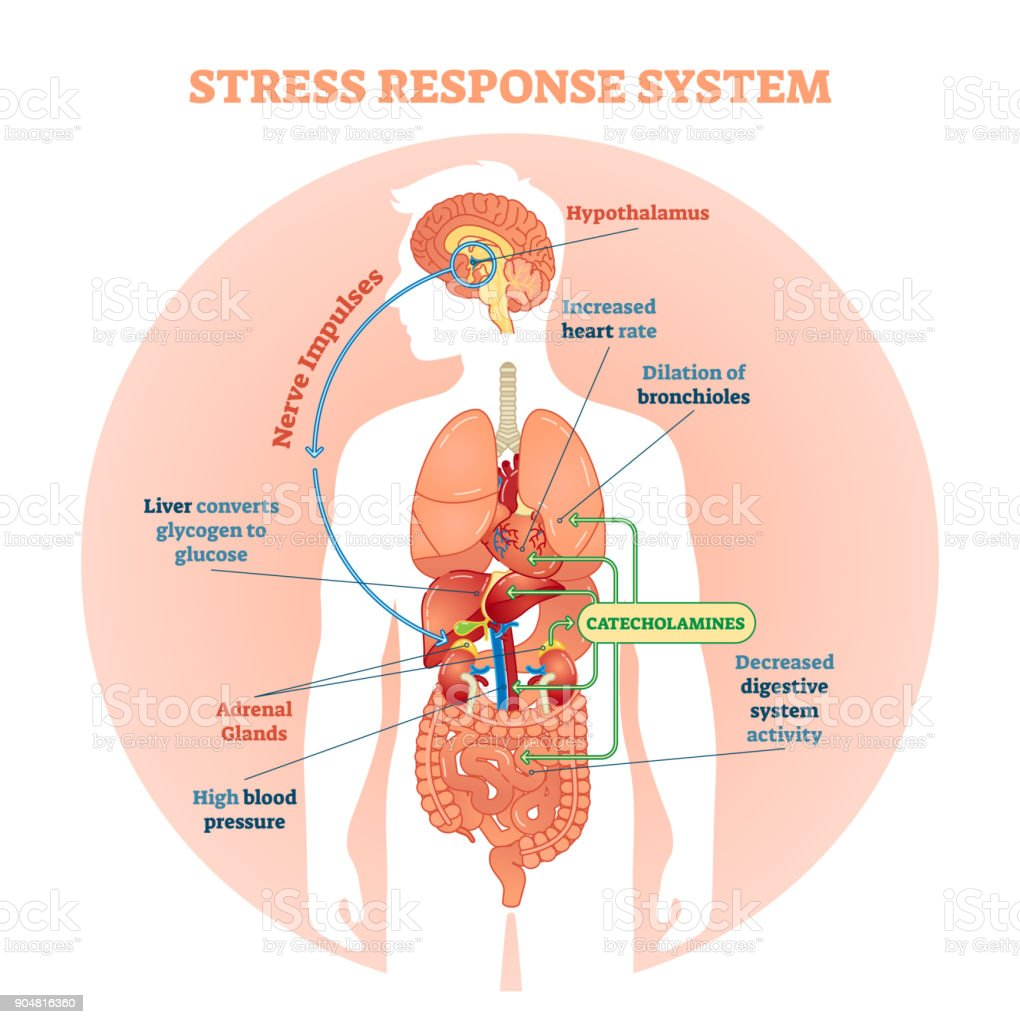 Stress response system vector illustration diagram, nerve impulses scheme. vector art illustration