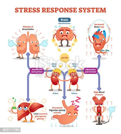 istock Stress response system vector illustration diagram, nerve impulses scheme. 923717280