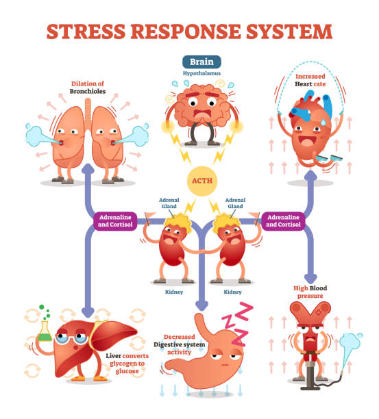 stress response system vector illustration diagram, nerve impulses scheme. - stress stock illustrations, clip art, cartoons, & icons