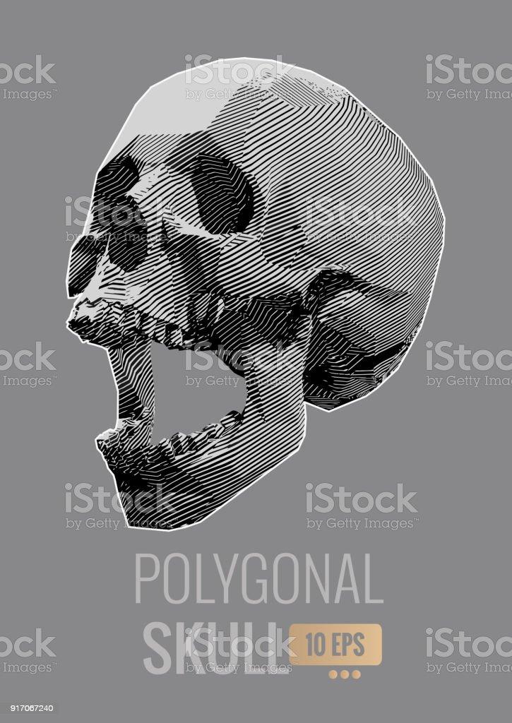 Ilustración De Cráneo Raya Línea Aislada En Bg Gris - Arte vectorial ...