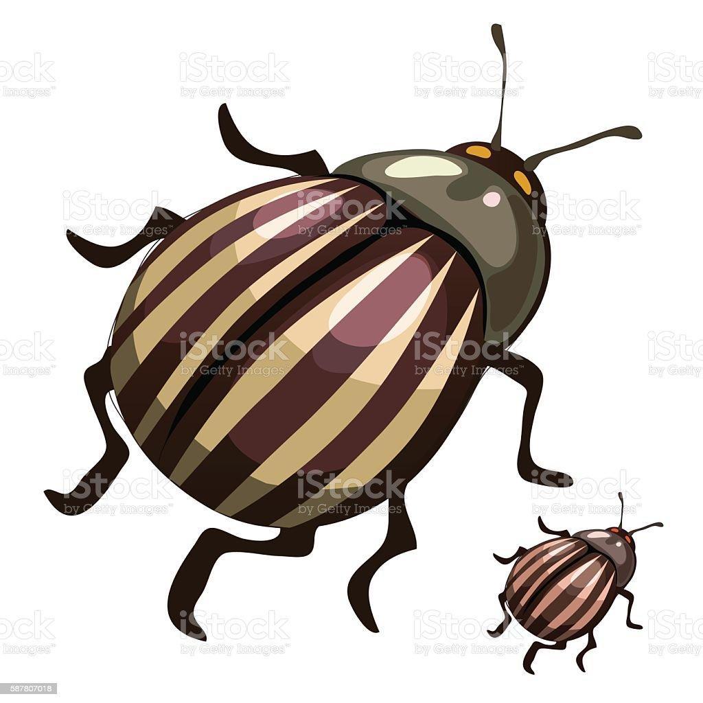 Striped colorado potato beetles, pests of plants vector art illustration