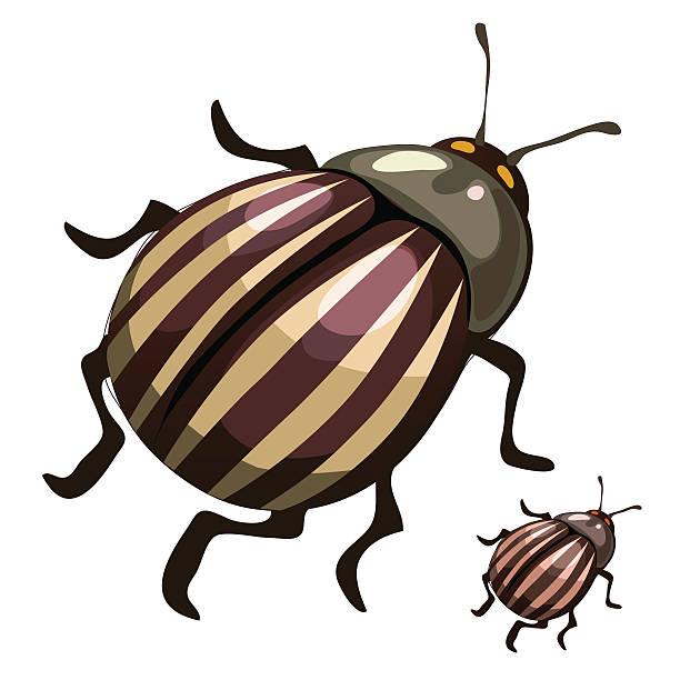 striped colorado potato beetles, pests of plants - square foot garden stock illustrations, clip art, cartoons, & icons