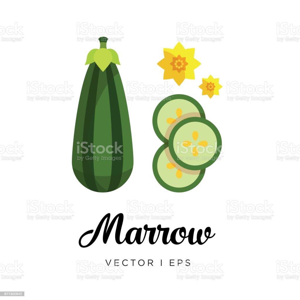 Striped Marrow vector editable image vector art illustration