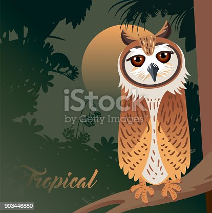 istock Striped Owl and forest 903446880