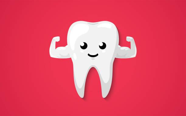bildbanksillustrationer, clip art samt tecknat material och ikoner med stark muskel frisk tand isolerad på en röd bakgrund. rena glada och leende. söt tecknad figur. tand hälsa. enkel tecknad design. platt stil vektor illustration. - molar
