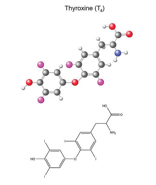 ilustraciones, imágenes clip art, dibujos animados e iconos de stock de química, fórmula estructural y modelo de tiroxina libre, la hormona tiroidea - thyroxine