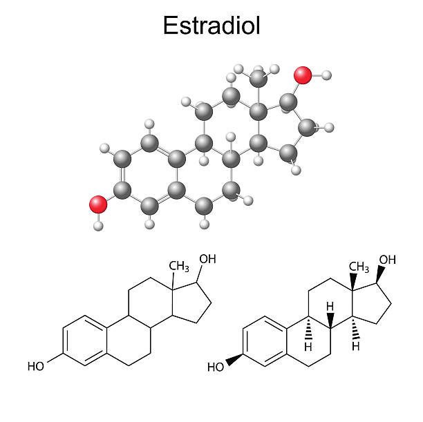 Structural chemical formulas and model of estradiol molecule Structural chemical formulas and model of estradiol molecule, 2D & 3D Illustration,  isolated on white background, vector, eps8 oestrogen stock illustrations