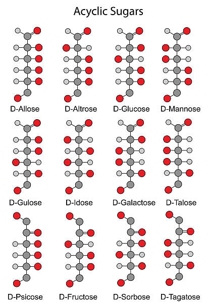 Structural chemical formulas of monosaccharides (hexoses) Acyclic basic structural chemical formulas of monosaccharides - hexoses. 2D illustration, vector, isolated on white background, eps 8 carbohydrate biological molecule stock illustrations