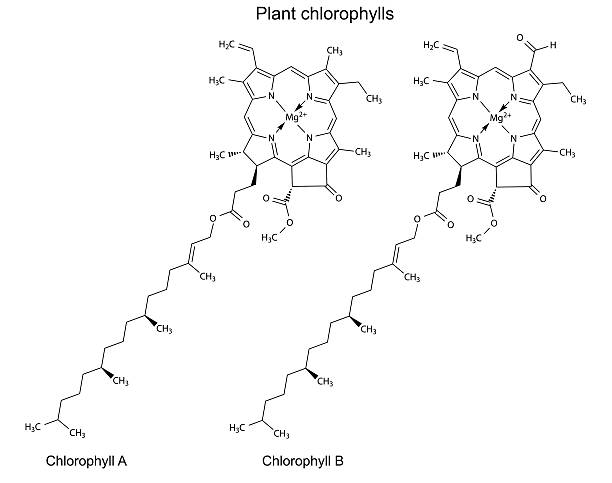 Structural chemical formulas of plant pigments chlorophylls Structural chemical formulas of plant pigments chlorophylls, 2d illustration, vector, isolated on white background chlorophyll stock illustrations