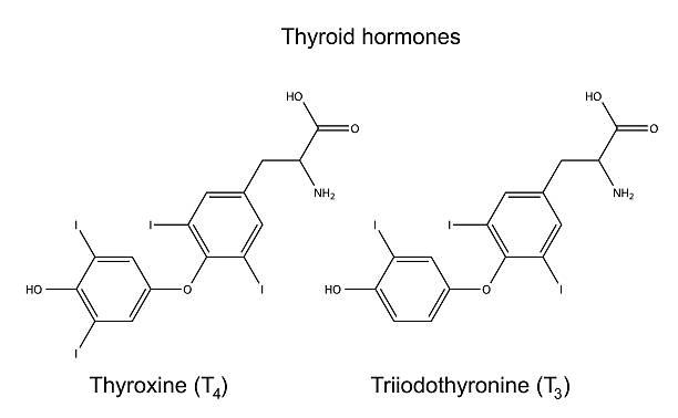 ilustraciones, imágenes clip art, dibujos animados e iconos de stock de química fórmulas estructurales de las hormonas tiroideas - thyroxine