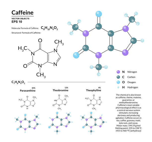 Structural chemical molecular formula and model of caffeine. Atoms are represented as spheres with color coding isolated on background. 2d or 3d visualization and skeletal formula Structural chemical molecular formula and model of caffeine. Atoms are represented as spheres with color coding isolated on background. 2d or 3d visualization and skeletal formula. Vector illustration caffeine stock illustrations