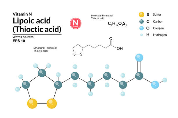 Structural chemical molecular formula and model of Lipoic acid. Atoms are represented as spheres with color coding isolated on background. 2d and 3d visualization and skeletal formula. Vector formula Structural chemical molecular formula and model of Lipoic acid. Atoms are represented as spheres with color coding isolated on background. 2d and 3d visualization and skeletal formula. Vector formula acid stock illustrations