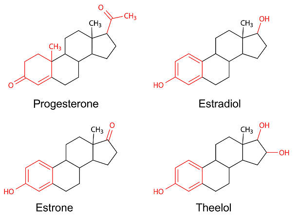 Best Estrogen Illustrations, Royalty-Free Vector Graphics