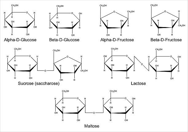Structural formulas of the main saccharides Structural formulas of the main cyclic monosaccharides and disaccharides. Isolated 2D Illustration carbohydrate biological molecule stock illustrations