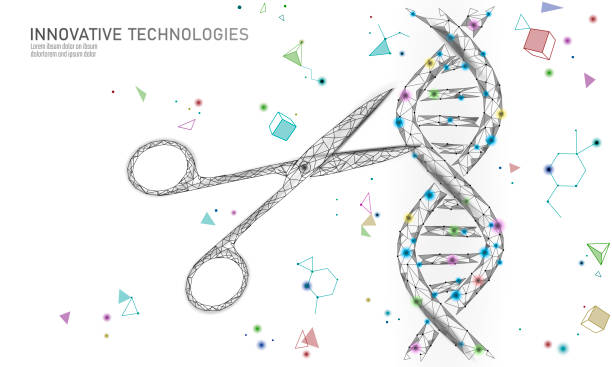 DNA 3D structure editing medicine concept. Low poly polygonal triangle gene therapy cure genetic disease. GMO engineering CRISPR Cas9 innovation modern technology science banner vector illustration DNA 3D structure editing medicine concept. Low poly polygonal triangle gene therapy cure genetic disease. GMO engineering CRISPR Cas9 innovation modern technology science banner vector illustration art genomics stock illustrations