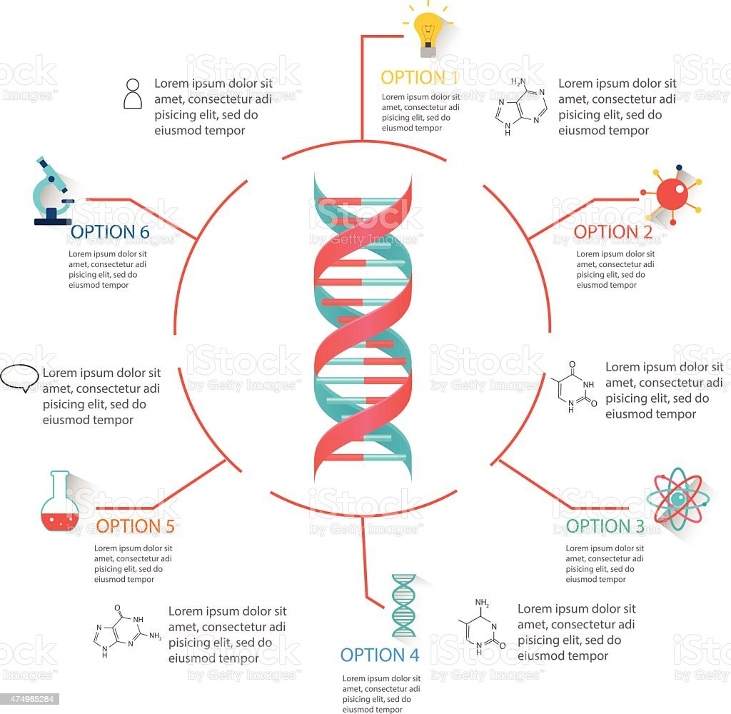 DNA structure infographic vector art illustration