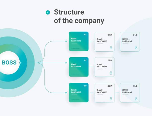 stockillustraties, clipart, cartoons en iconen met structuur van het bedrijf. bedrijfshiërarchie organogram grafiek infographics. grafische elementen van de organisatiestructuur van het bedrijf. - infographic