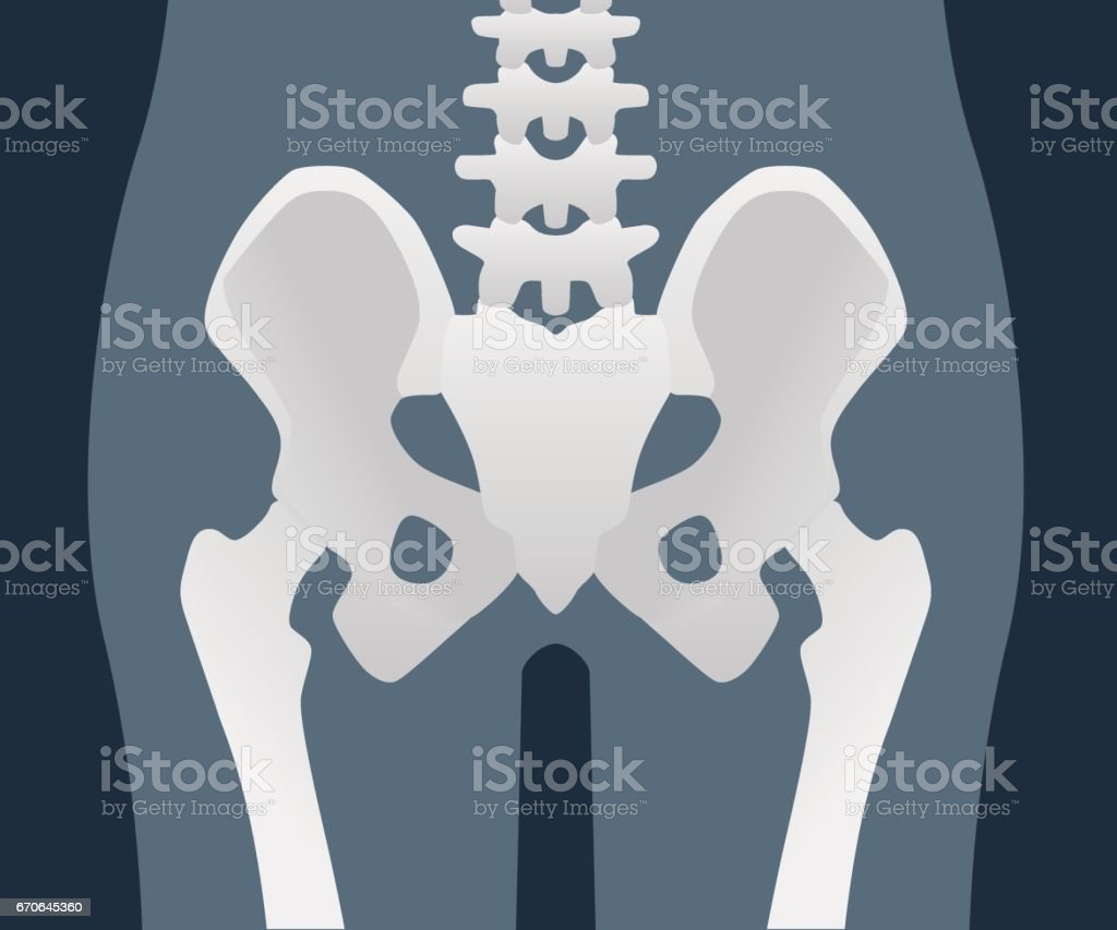 Structure Of The Hip Joint Vector Illustration Stock Vector Art