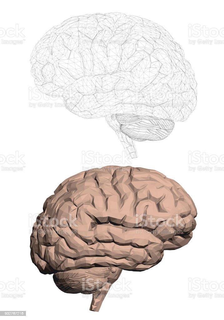 Structure of the human brain - illustrazione arte vettoriale