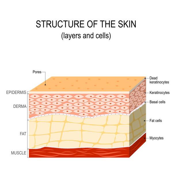 stockillustraties, clipart, cartoons en iconen met structuur van de menselijke huid - menselijke huid