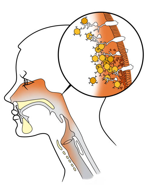 illustrazioni stock, clip art, cartoni animati e icone di tendenza di structure of the nasal influenza virus - bocca umana