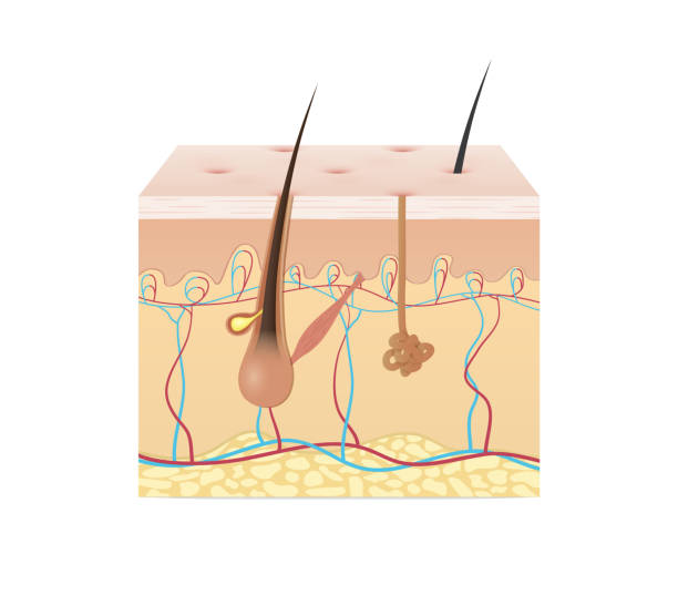 Subcutaneous Injection Illustrations, Royalty-Free Vector ...