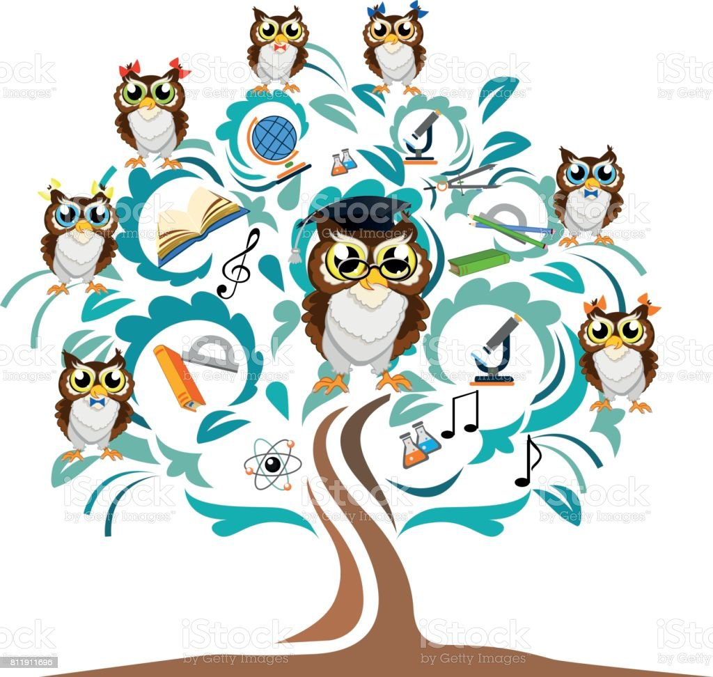 study owl