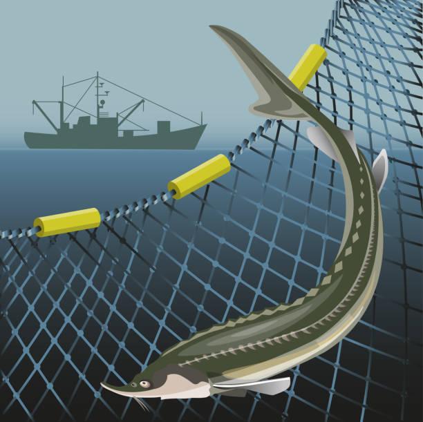 ilustrações de stock, clip art, desenhos animados e ícones de sturgeon fish and marine nets - aquacultura