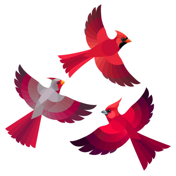 Royalty Free Cardinal Flying Clip Art, Vector Images ...