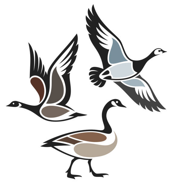 Stylized Birds Stylized Birds - Wild Geese canada goose stock illustrations